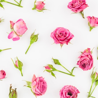 白い背景にピンクのバラや芽