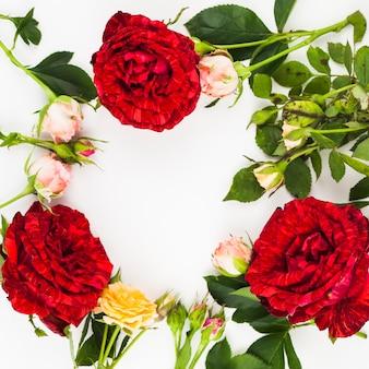 白い背景に新鮮なバラの装飾
