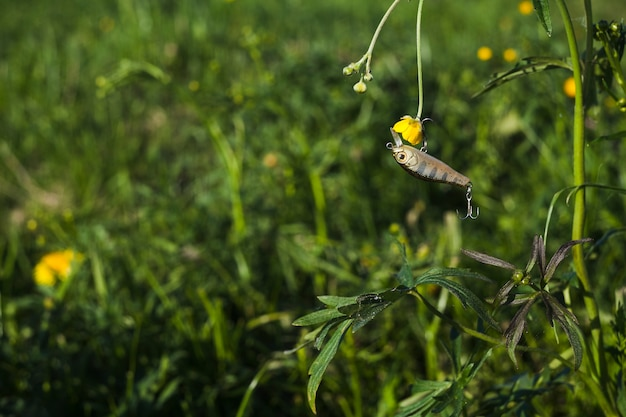 新鮮な黄色の花と釣りルアー