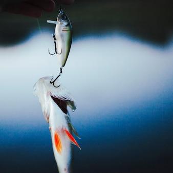 釣りフックに巻き込まれた魚