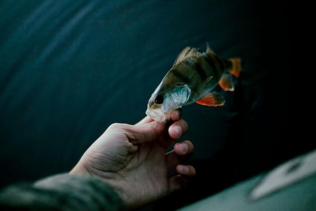 新鮮な魚と漁師の手のクローズアップ