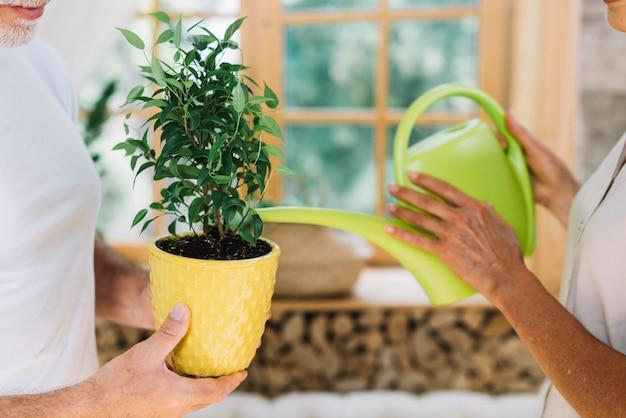 Крупный план женщины, поливающей горшечное растение, держат его муж