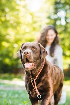 Портрет милой собаки в парке