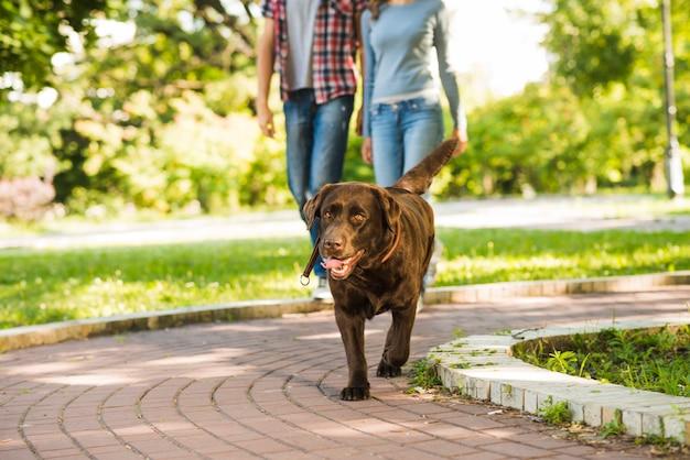 カップルの前に歩道を歩く犬