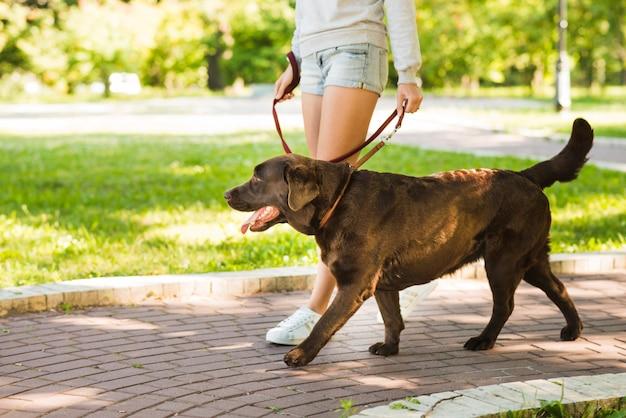 公園の歩道に犬と一緒に歩いている女性