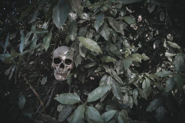 Мрачный череп, торчащий растениями