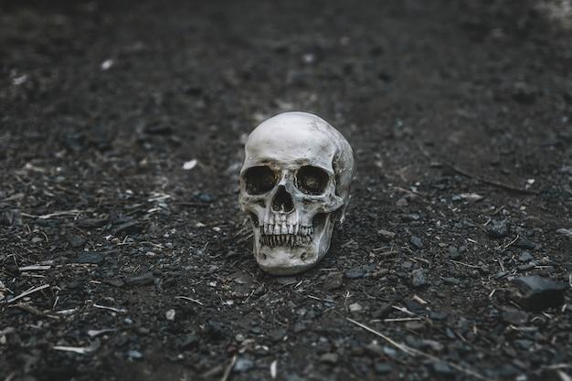 灰色の土壌に置かれた死んだ頭蓋