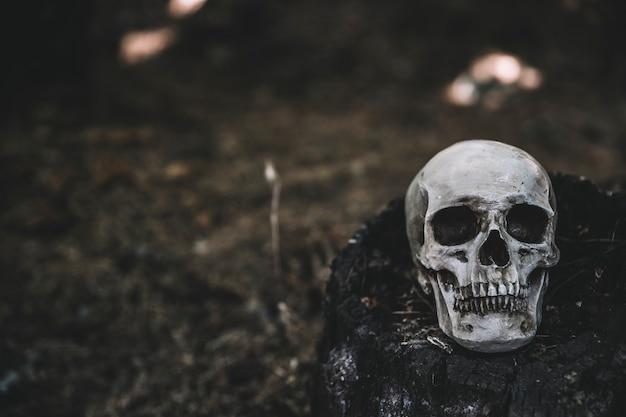 死んだ頭蓋骨が黒い切り株に置かれた