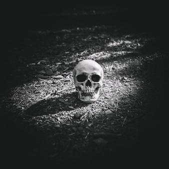 灰色の土に置かれた死んで照らされた頭蓋骨