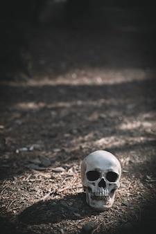 昼間の灰色の土壌に置かれた死んだ頭蓋