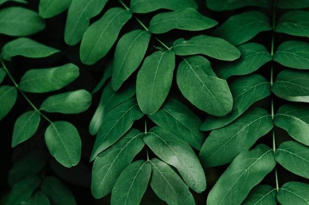 緑の熱帯の葉