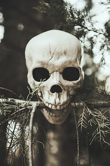 森の中の枝の頭骨