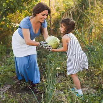 フィールドで彼女の娘に収穫キャベツを与える笑顔の女性