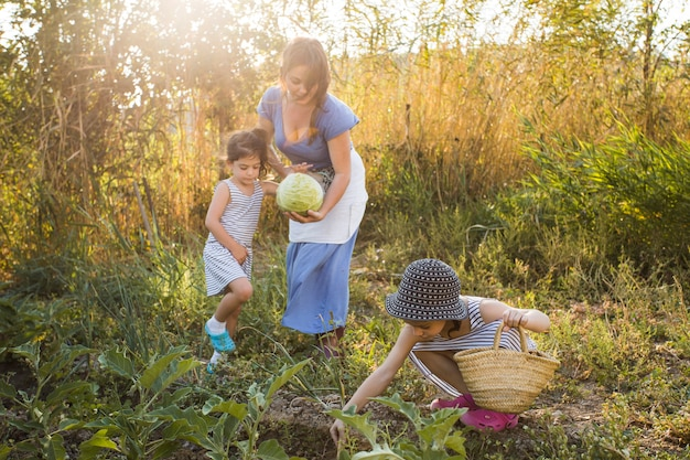 フィールドで野菜を収穫する家族