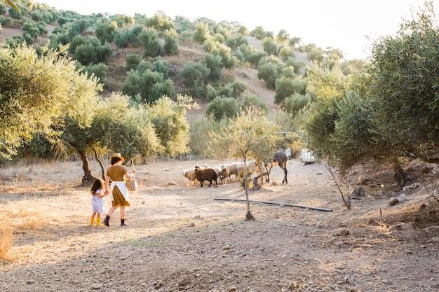 フィールドで羊を群がる母親と娘の後ろ姿