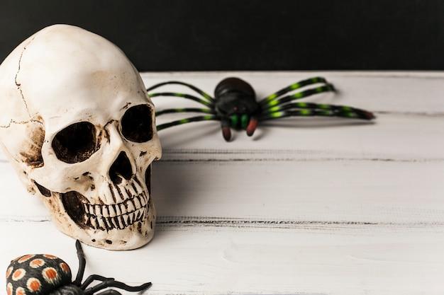 頭蓋骨とおもちゃのクモ