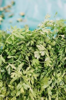 緑の新鮮なパセリの極端なクローズアップ