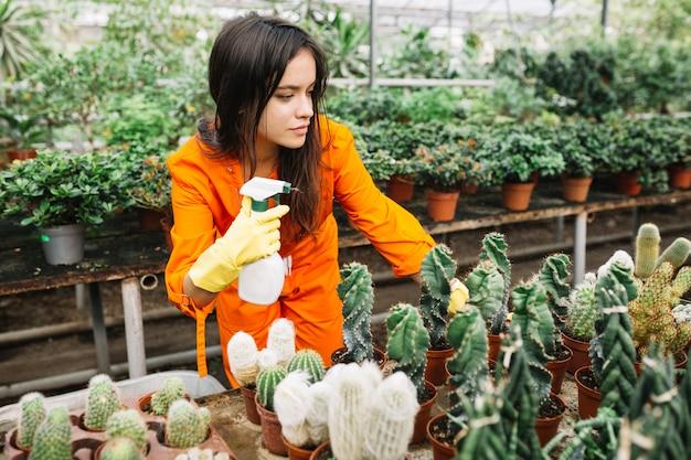 Женский садовник в спецодежде, распыляющий воду на растения кактуса в теплице