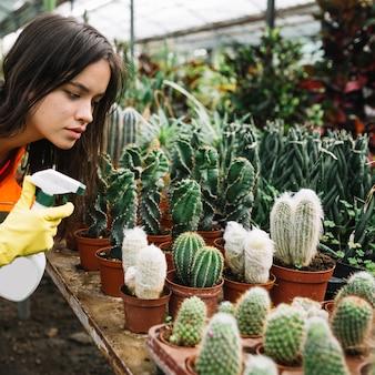 Крупный план садовода-женщины, распыляющего воду на суккулентных растениях