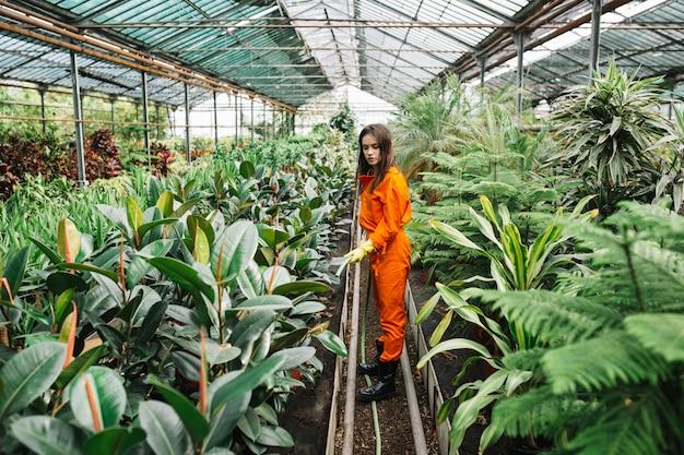 温室内のホースで植物を育てている女性の庭師