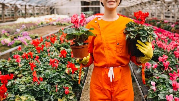 温室にピンクと赤のシクラメンの花の鉢を持つ女性の庭師