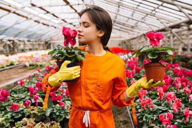 温室でピンクの花を嗅ぐ若い女性の庭師