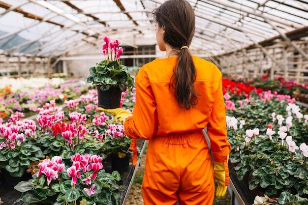 温室でピンクの花の鉢を持っている女性の庭師のリアビュー