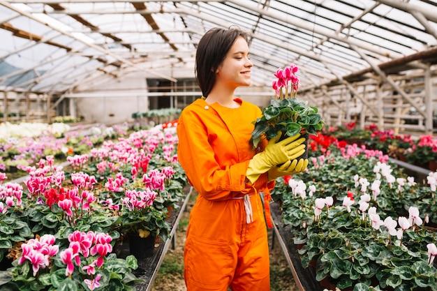温室でピンクの花の鉢を持つ若い女性の庭師を笑顔