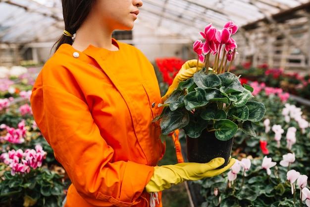 ピンク色の花瓶を保持する女性の庭師のクローズアップ