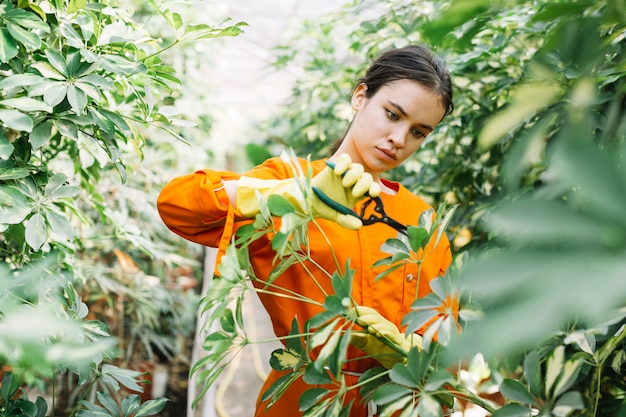 美しい女性の庭師は、セクレタリーと植物を剪定する