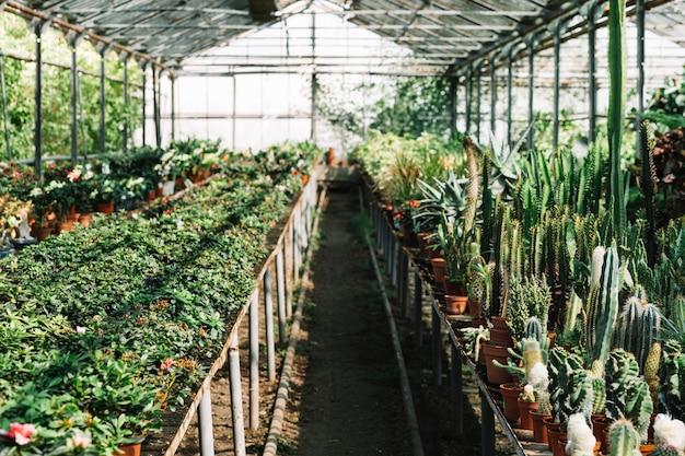 温室内で生育する新鮮な植物