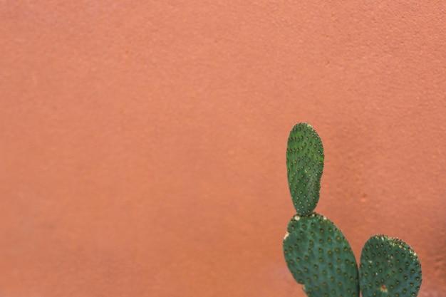 茶色の背景に対する梨状のノーパールのサボテン