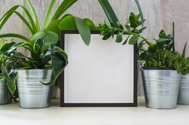 白い額縁で装飾されたシルバーの鉢植えの植物