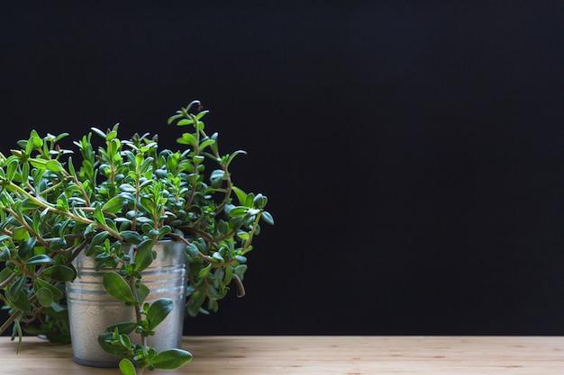 黒の背景に木製のテーブルにアルミポットの小さな植物