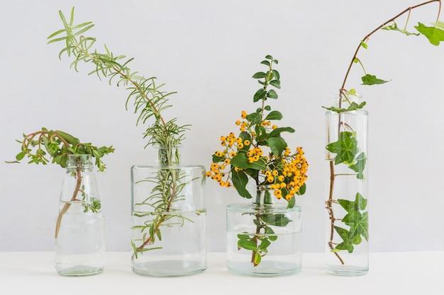 Растения в прозрачной вазе на столе на белом фоне