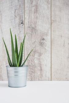 白い机の上にアルミ容器のアロエベラ植物
