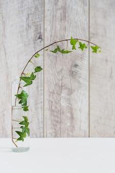 白い机のガラスの透明な花瓶の中に蔦の枝を曲げる