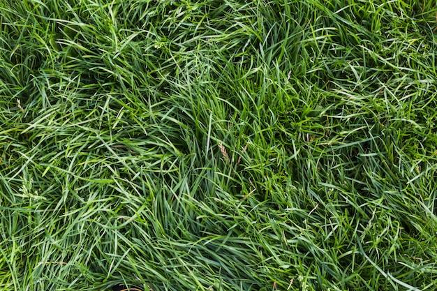 新鮮な緑の草の背景
