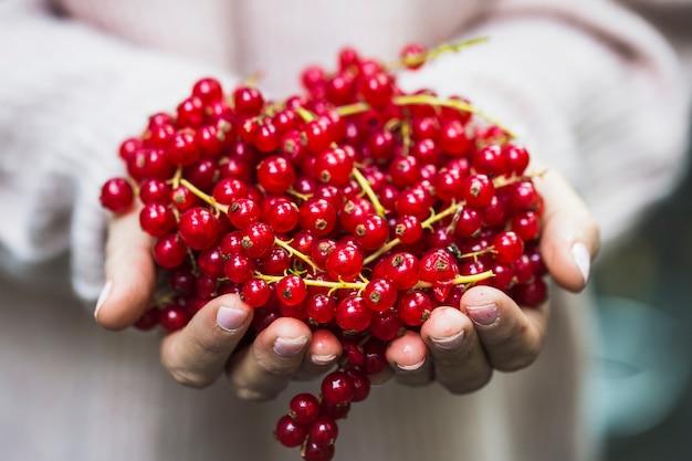 手にある、赤、カラント、果実のクローズアップ