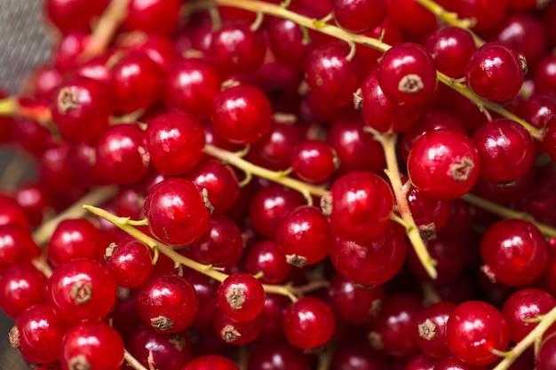 赤いカラントの果実のクローズアップ