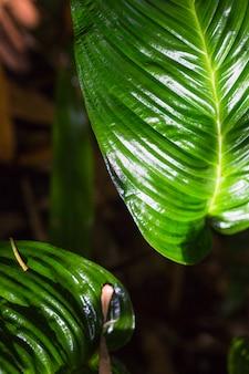 暗い緑の葉パターンの極端なクローズアップ