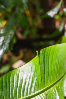 熱帯の葉のテクスチャのクローズアップ