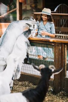 ヤギに食べ物を与える笑顔の女の子