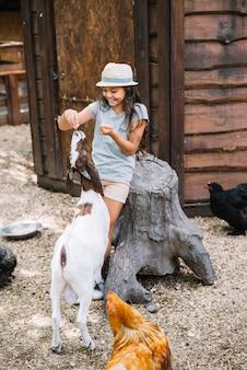 納屋でヤギに食べ物を食べさせる笑顔の女の子