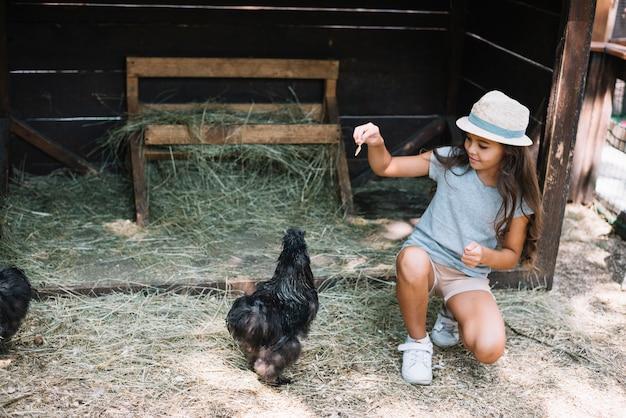 女の子が農場で鶏に餌を食べる