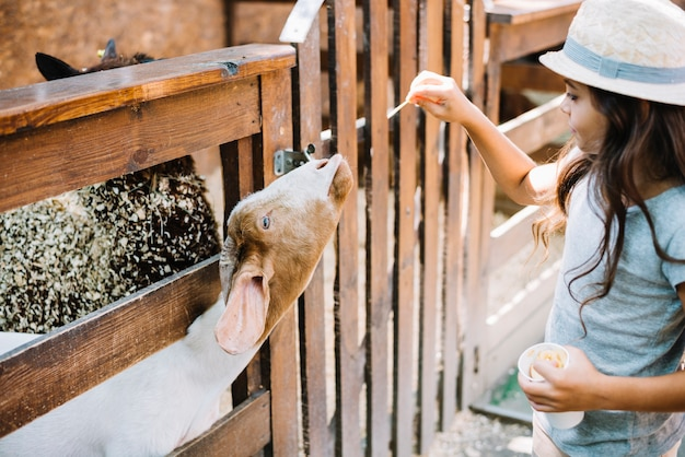 フェンスから山羊を覗いて山羊に食べ物を与える女の子のクローズアップ