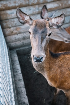 納屋の中の鹿のクローズアップ