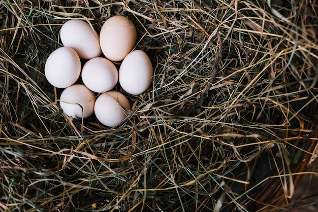 巣からの新鮮な鶏卵のオーバーヘッドビュー