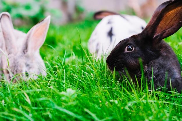 緑色の草の上にウサギのクローズアップ