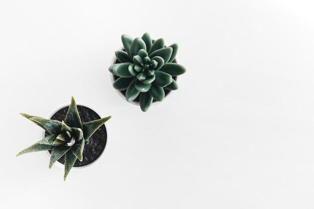 白い背景にサボテン鉢植え